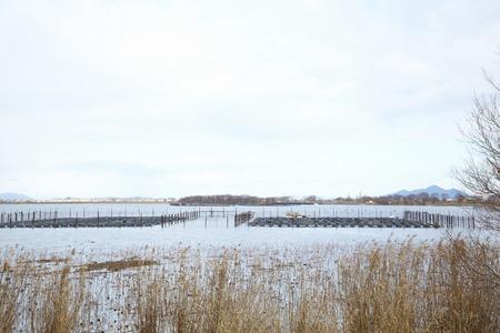 lakeside: Lakeside of Japanese pampas grass