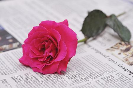 バラと英字新聞