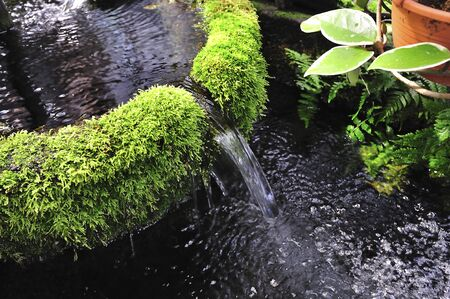 spring water: Spring water and bog moss