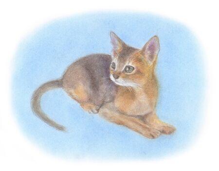 abyssinian: Kitten of Abyssinian