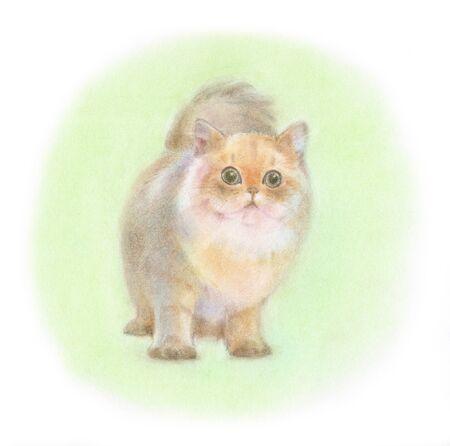 chinchilla: Chinchilla Golden