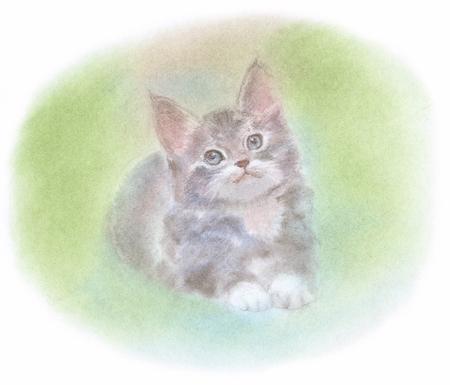 maine coon: Kitten of Maine Coon Stock Photo