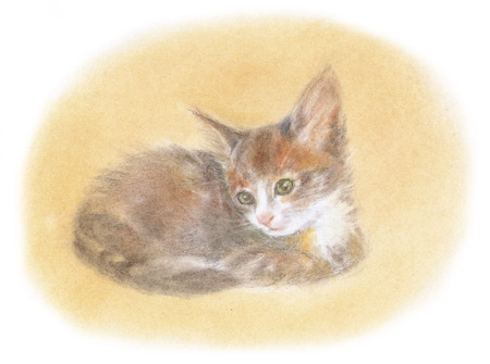 angola: Kitten of Turkish Angola Stock Photo