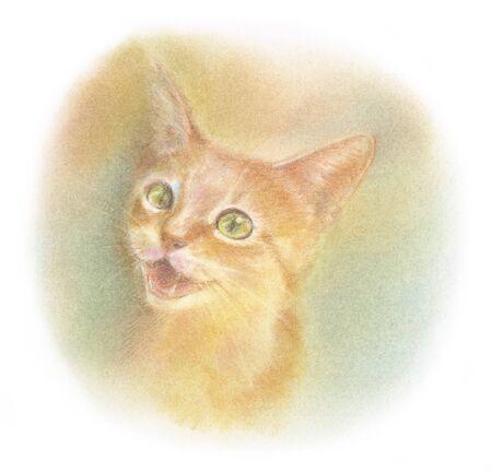 子猫の茶虎ではなく 写真素材