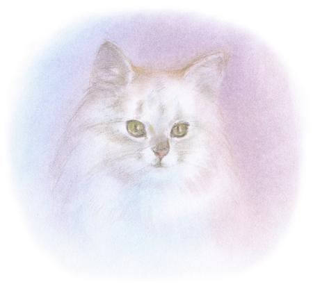 chinchilla: Chinchilla Silver