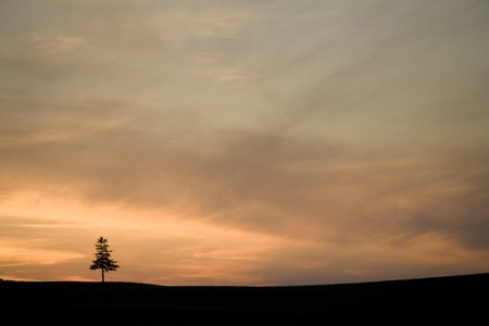 single tree: Dusk of a single tree