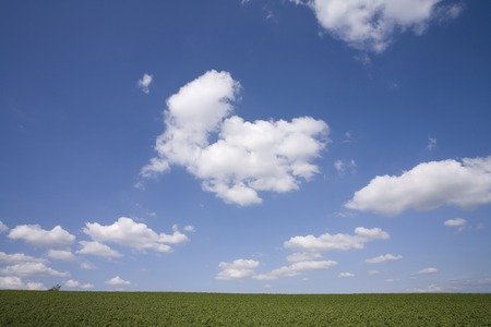 herbage: Meadows and clouds