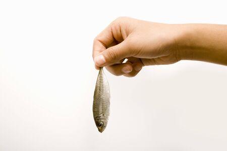 animal body part: Childrens hands
