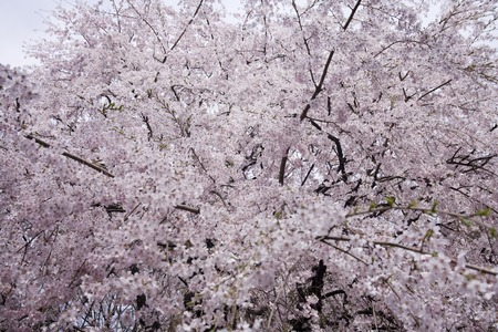 sumida: Sumida Park