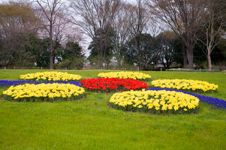 garden scenery: Showa Memorial Park of flower beds