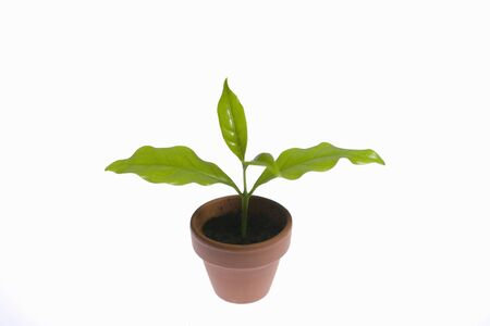 potted: Potted Green