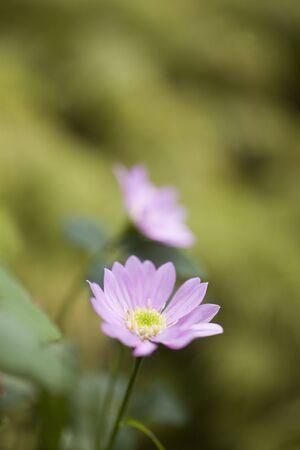 floret: Pink floret