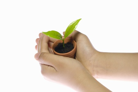 childs: Flowerpot on the childs hands Stock Photo