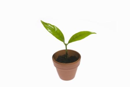 flowerpot: Sprout of flowerpot