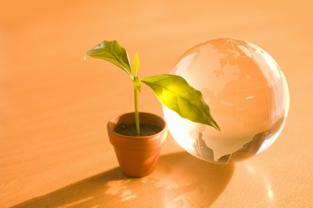 Flowerpot of sprouts and globe Stock Photo