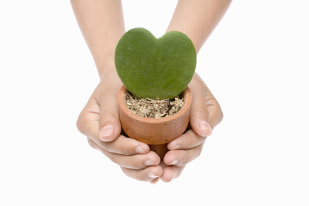 child's: Flowerpot on the childs hands Stock Photo