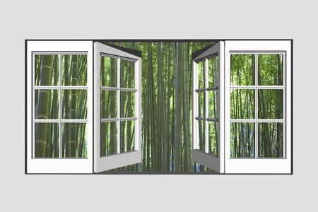 view to outside: Bamboo forest from window Stock Photo