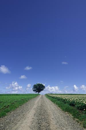 1: 1 main road of gravel