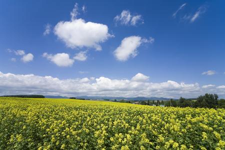 oka: Igarashi blooming hills and cloud