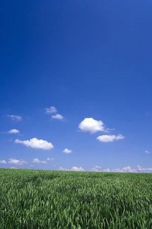 magnificence: Meadows and clouds