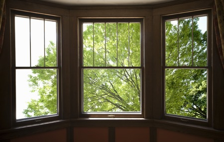 sunroom: Fresh green from the window