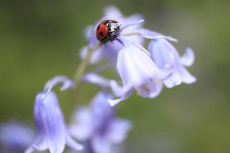花とてんとう虫 写真素材 - 49319817