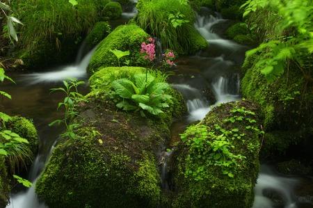 waterside: Mountain stream and Kurinsou