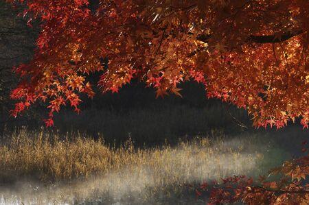 northeast: Bishamon and maple Stock Photo