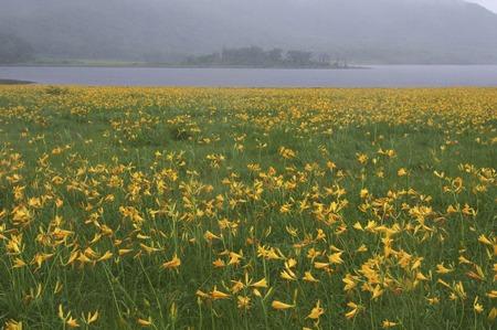 day lily: Oguni-numa Pond and day lily