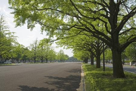 treelined: Fresh green tree-lined Stock Photo