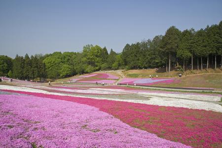 early summer: Early summer of Hitsujiyama park Stock Photo