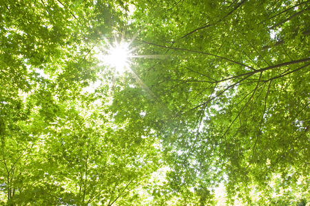 Fresh green and shine Stock Photo