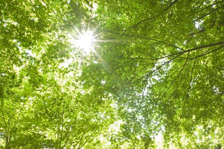 luz natural: Verde fresco y brillo Foto de archivo