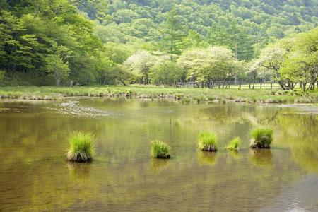 early summer: Early summer of Kotokunuma Stock Photo