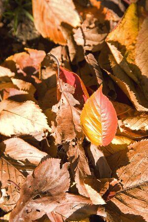 shine: Fallen leaf shine