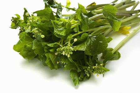 wasabi: Wasabi flowers Stock Photo