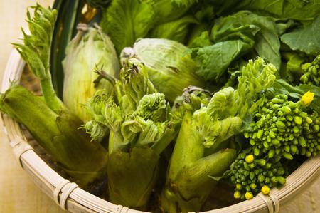aralia: Spring Greens Stock Photo