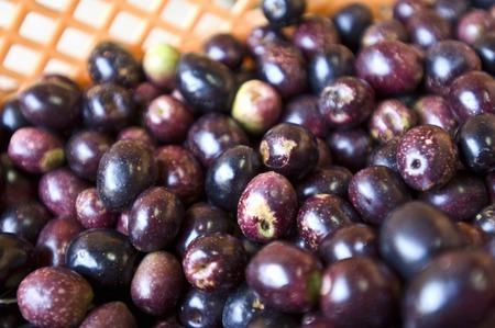 ripe: Ripe olives