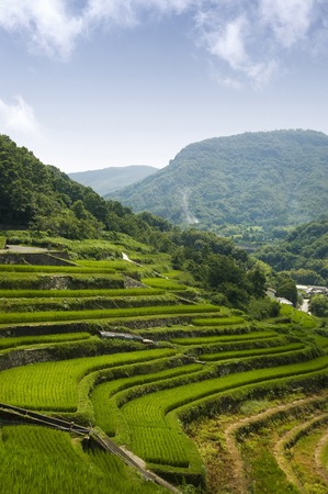 gradas: Terrazas de arroz