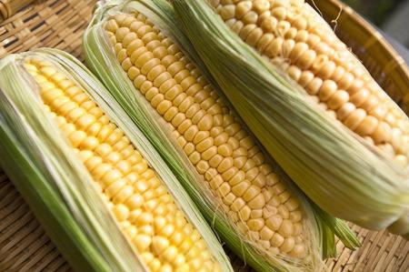 Corn 免版税图像