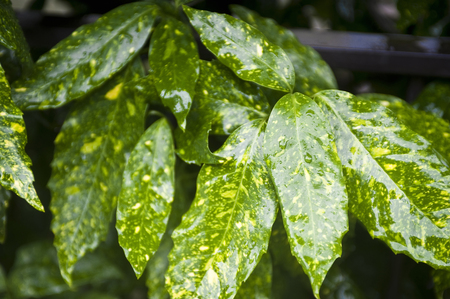 kropla deszczu: Raindrop