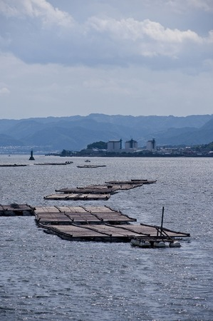 raft: Oyster raft
