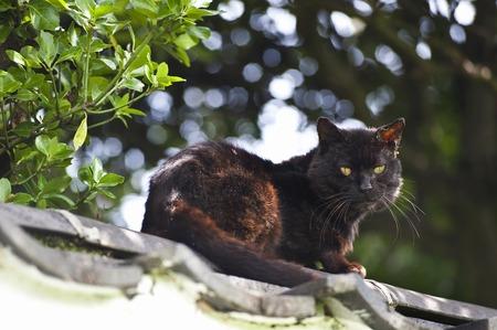 sanyo: Black Cat