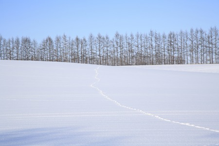 snowfield: Snowfield landscape with footprints Stock Photo