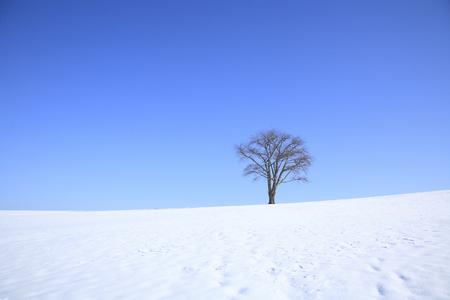 snowy field: Snowy field one tree Stock Photo