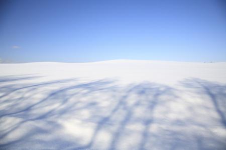 snowy field: Shadow of a snowy field tree