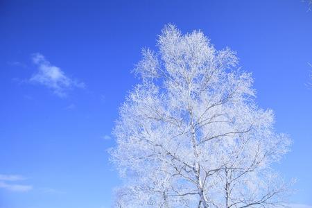 Rime ice