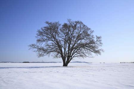 elm: Tree of spring elm Stock Photo
