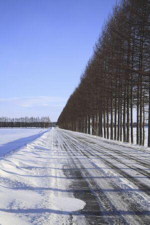 winter road: Windbreaks and winter road
