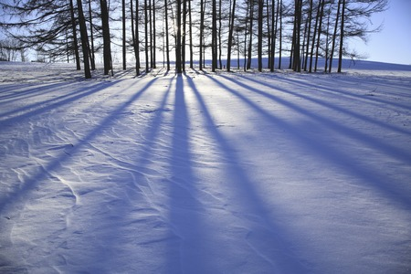 extending: The shadow of the tree extending in a snowy field
